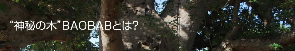 """神秘の木""""バオバブ""""とは?"""