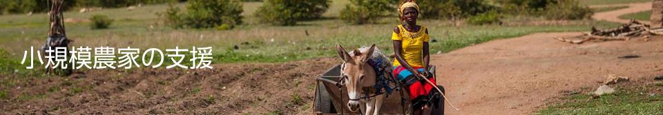 小規模農家の支援