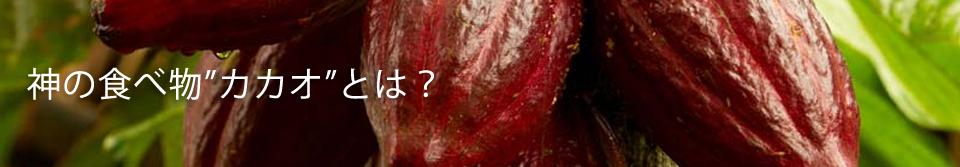"""神の食べ物""""カカオ""""とは?"""